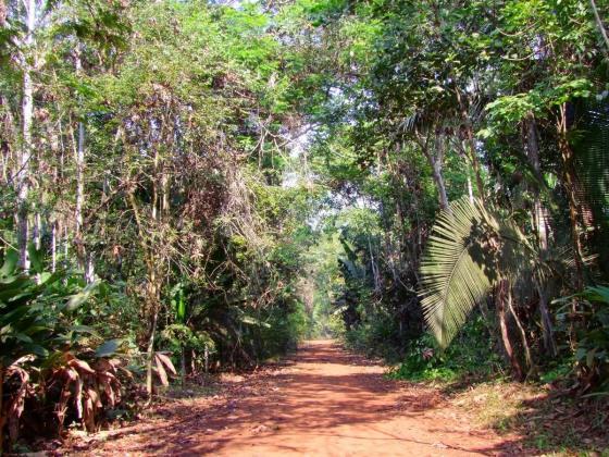 sedam rondonia timber corruption illegal logging