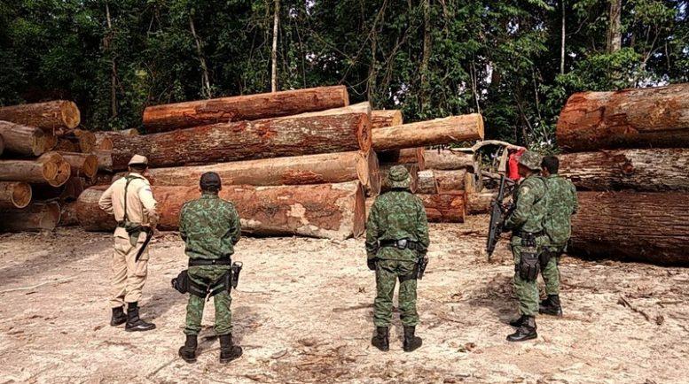 logs seized in Manacupuru