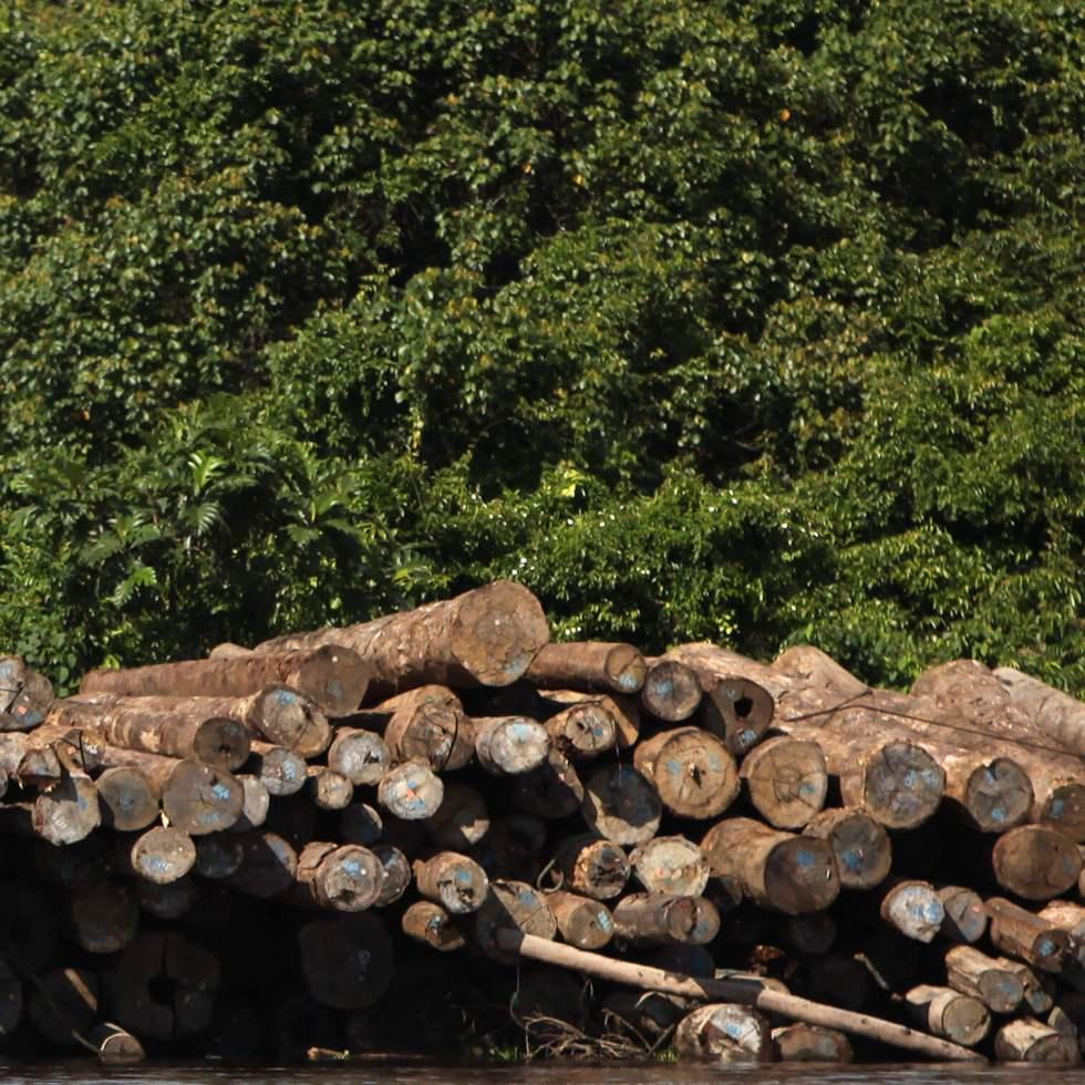 log pile on river bank