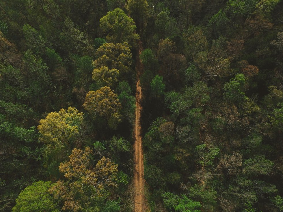 Arial view of forest for the timbercheck illegal logging newsletter