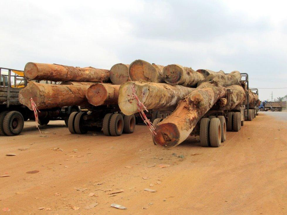 Logging trucks in Gabon