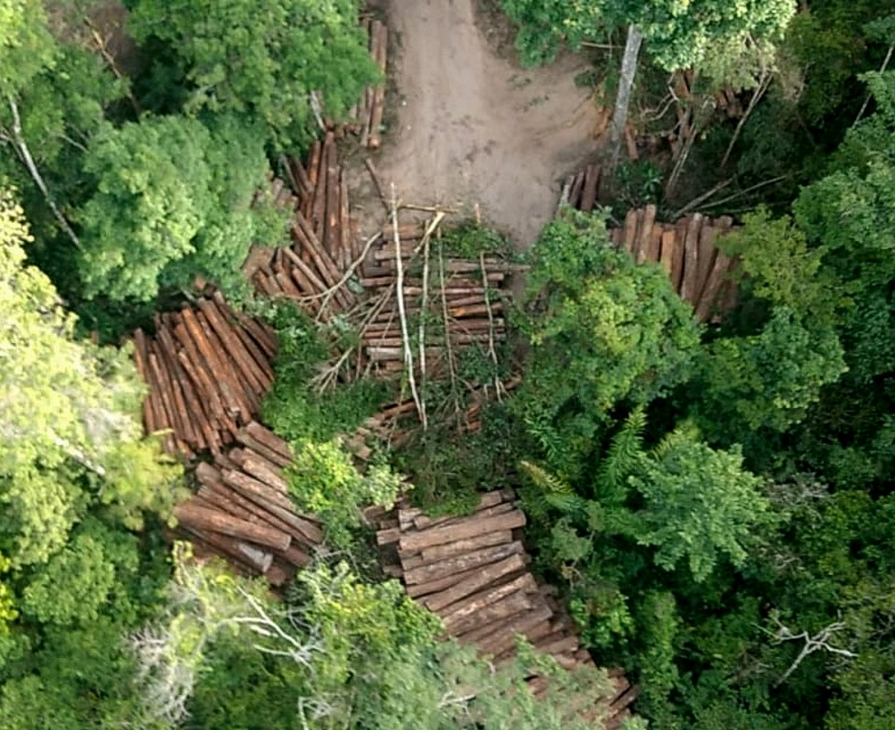 Illegal logging deck in Roraima, Brazil