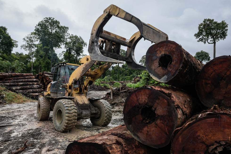 Front loader stacks logs on a logging deck in Brazil